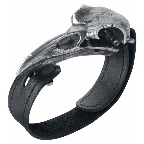 Alchemy Gothic - Raven Skull - Bracelet - Standard
