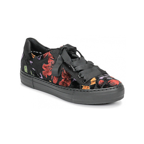 Ara 37484-81 women's Shoes (Trainers) in Multicolour